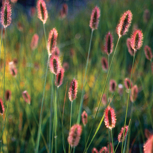 Photo: Bunny Tails