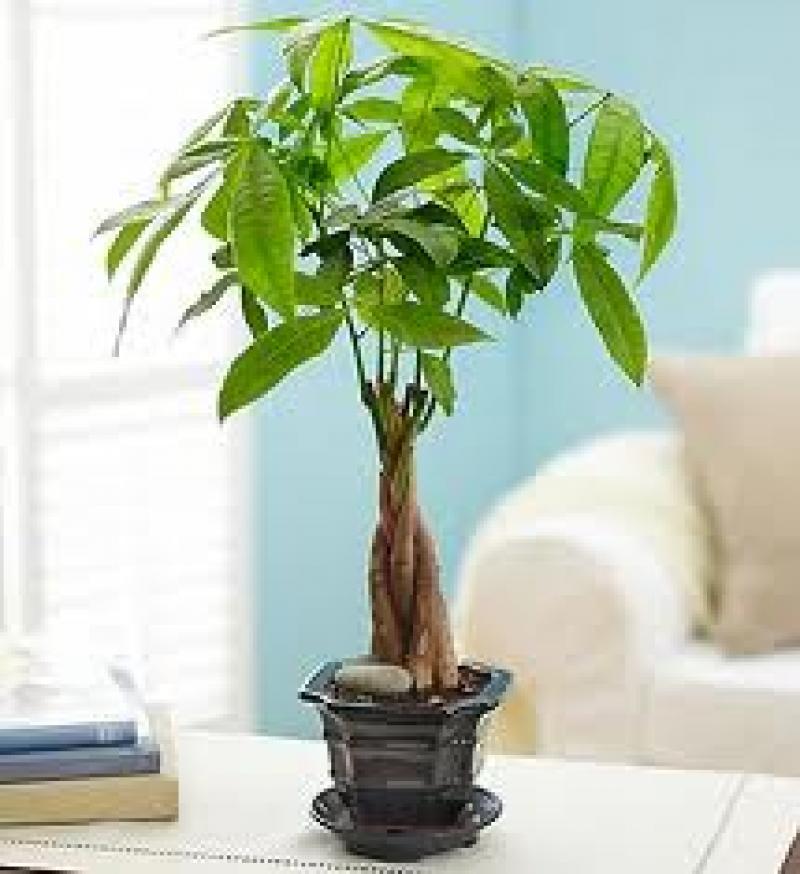Photo money tree