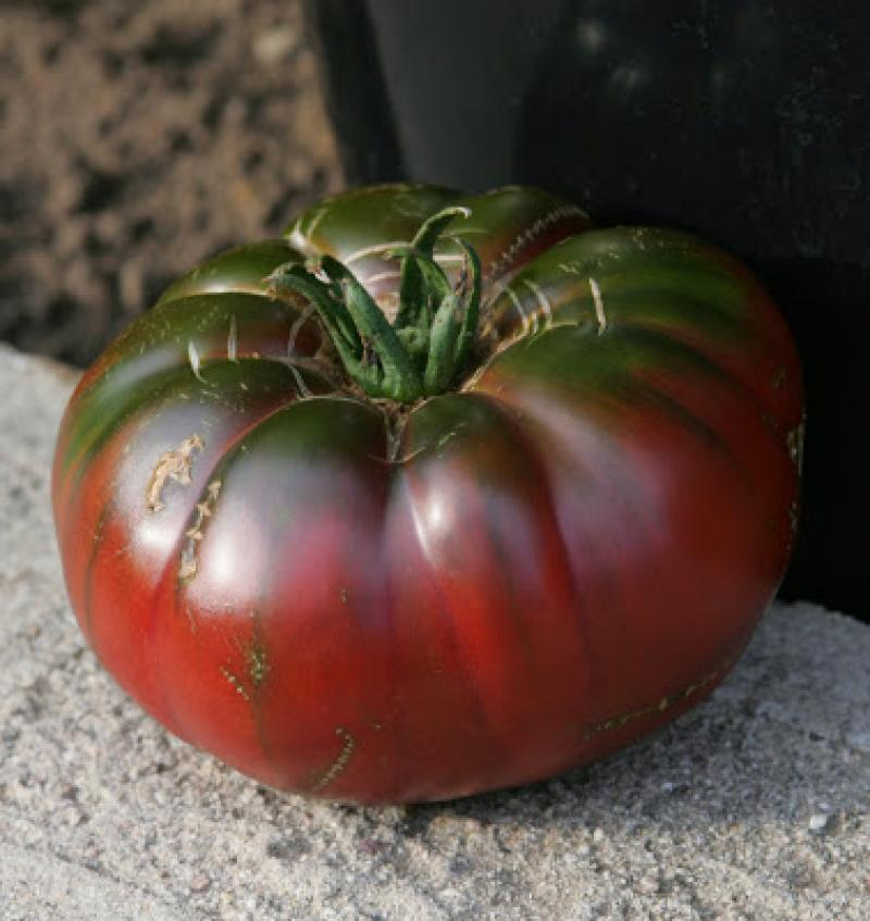 Photo: Tomato 'Black From Tula'